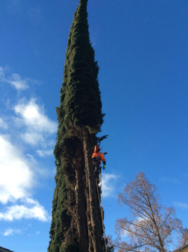 Discovery Tree Care Ceres, CA