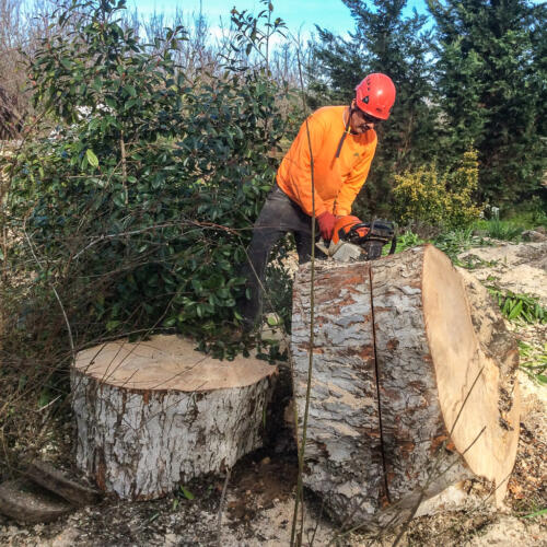 Discovery Tree Care CuttingStump
